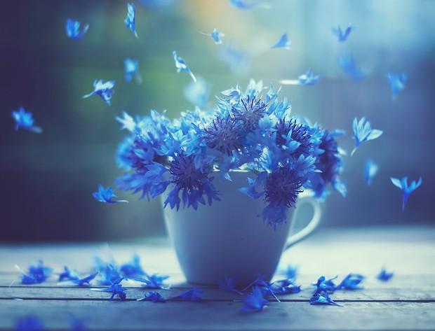 Bộ ảnh vũ điệu loài hoa tuyệt đẹp dành cho người yêu thiên nhiên - Ảnh 5.