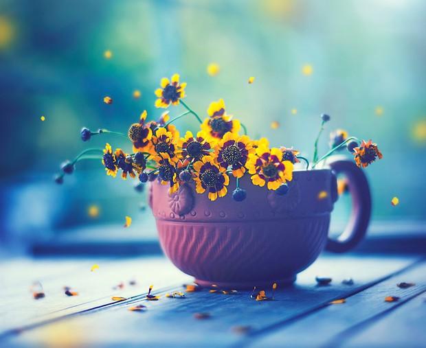 Bộ ảnh vũ điệu loài hoa tuyệt đẹp dành cho người yêu thiên nhiên - Ảnh 14.