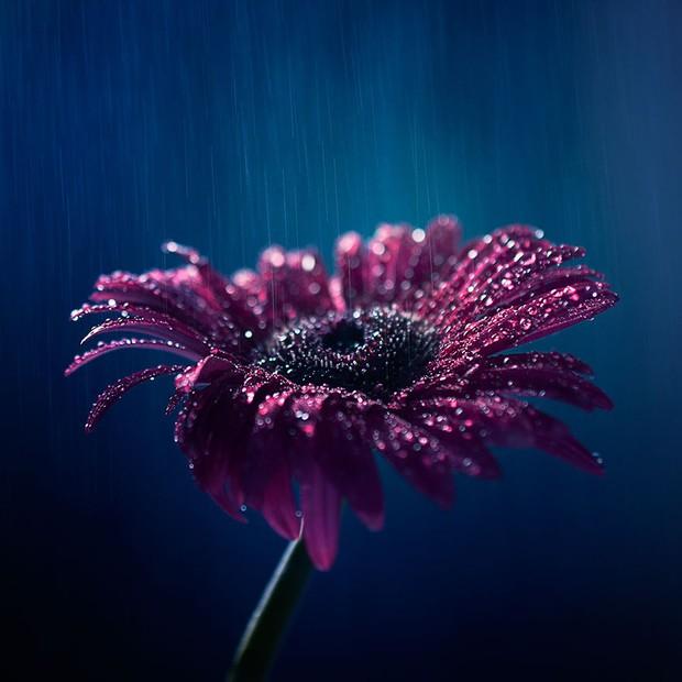 Bộ ảnh vũ điệu loài hoa tuyệt đẹp dành cho người yêu thiên nhiên - Ảnh 4.