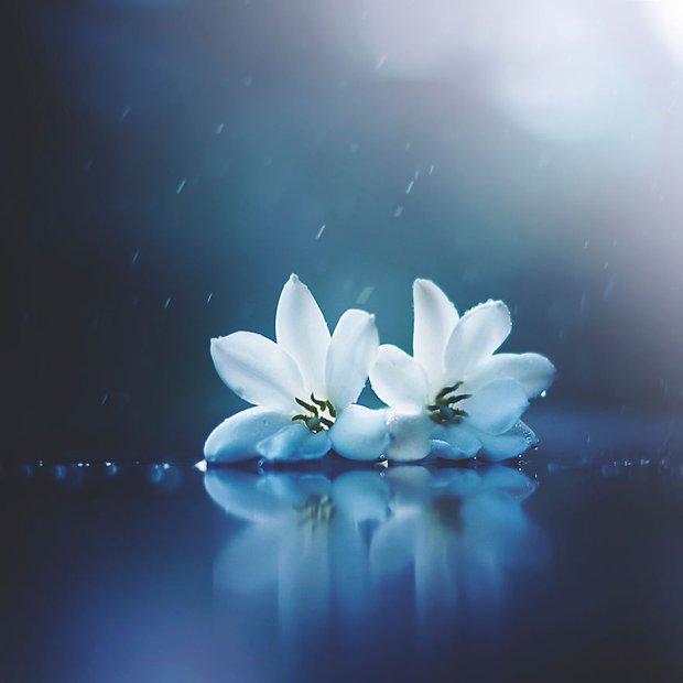 Bộ ảnh vũ điệu loài hoa tuyệt đẹp dành cho người yêu thiên nhiên - Ảnh 12.