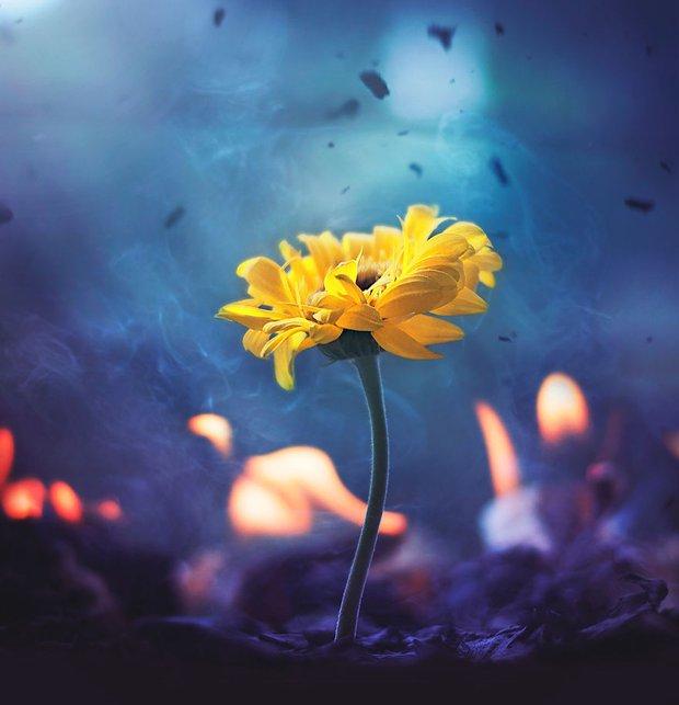 Bộ ảnh vũ điệu loài hoa tuyệt đẹp dành cho người yêu thiên nhiên - Ảnh 15.