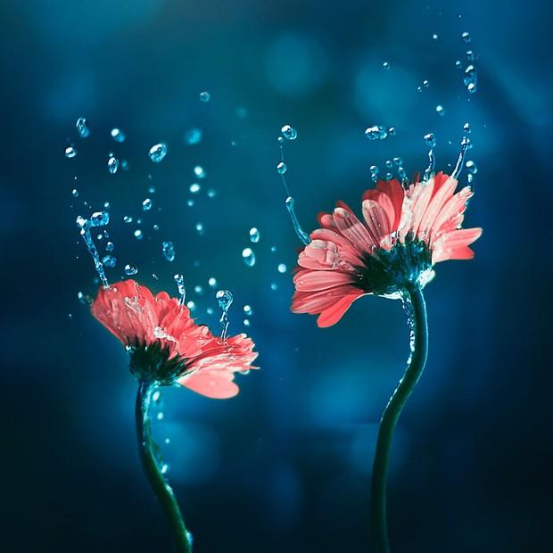 Bộ ảnh vũ điệu loài hoa tuyệt đẹp dành cho người yêu thiên nhiên - Ảnh 1.