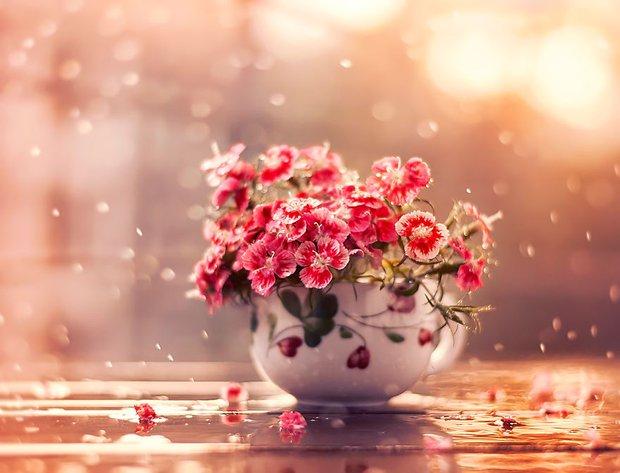 Bộ ảnh vũ điệu loài hoa tuyệt đẹp dành cho người yêu thiên nhiên - Ảnh 2.