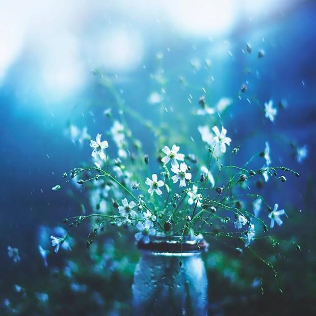 Bộ ảnh vũ điệu loài hoa tuyệt đẹp dành cho người yêu thiên nhiên - Ảnh 3.