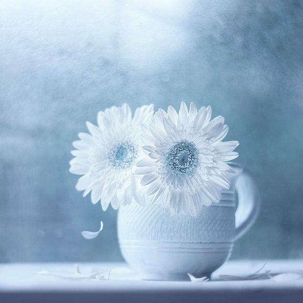 Bộ ảnh vũ điệu loài hoa tuyệt đẹp dành cho người yêu thiên nhiên - Ảnh 6.