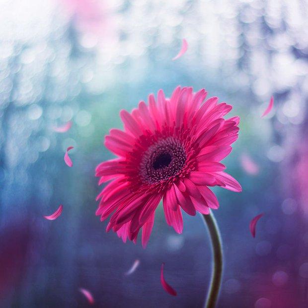 Bộ ảnh vũ điệu loài hoa tuyệt đẹp dành cho người yêu thiên nhiên - Ảnh 7.
