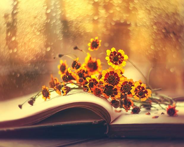 Bộ ảnh vũ điệu loài hoa tuyệt đẹp dành cho người yêu thiên nhiên - Ảnh 8.
