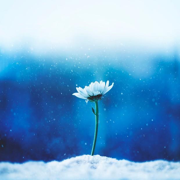 Bộ ảnh vũ điệu loài hoa tuyệt đẹp dành cho người yêu thiên nhiên - Ảnh 10.