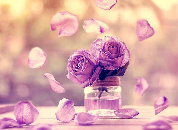 Bộ ảnh vũ điệu loài hoa tuyệt đẹp dành cho người yêu thiên nhiên - Ảnh 11.