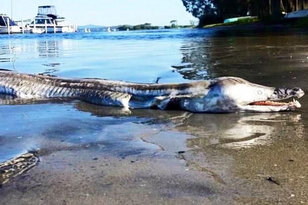 Quái vật khổng lồ giống cá sấu đang làm mưa làm gió trên mạng thực chất là gì? - Ảnh 1.