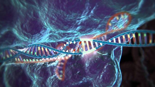 Tìm ra cách kháng virus HIV từ việc biến đổi gene phôi thai người - Ảnh 1.