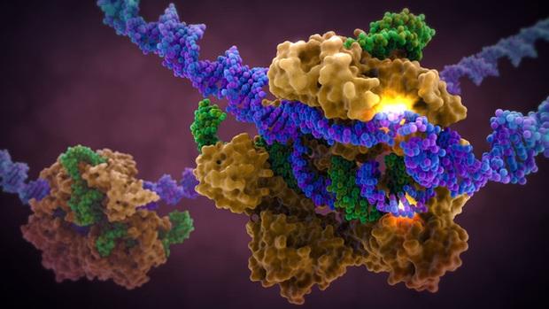 Tìm ra cách kháng virus HIV từ việc biến đổi gene phôi thai người - Ảnh 2.