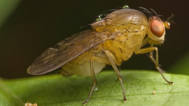 Đừng sốc khi biết sự thật này: Quá nửa cơ thể của chúng ta giống hệt... con ruồi và quả chuối - Ảnh 6.