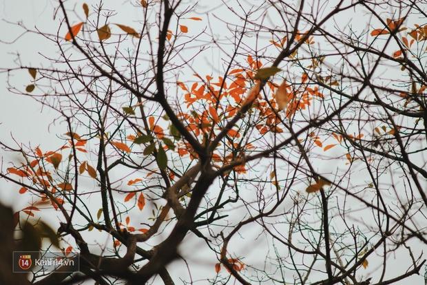 Ai nói Hà Nội không có mùa lá vàng, lá đỏ? - Ảnh 4.