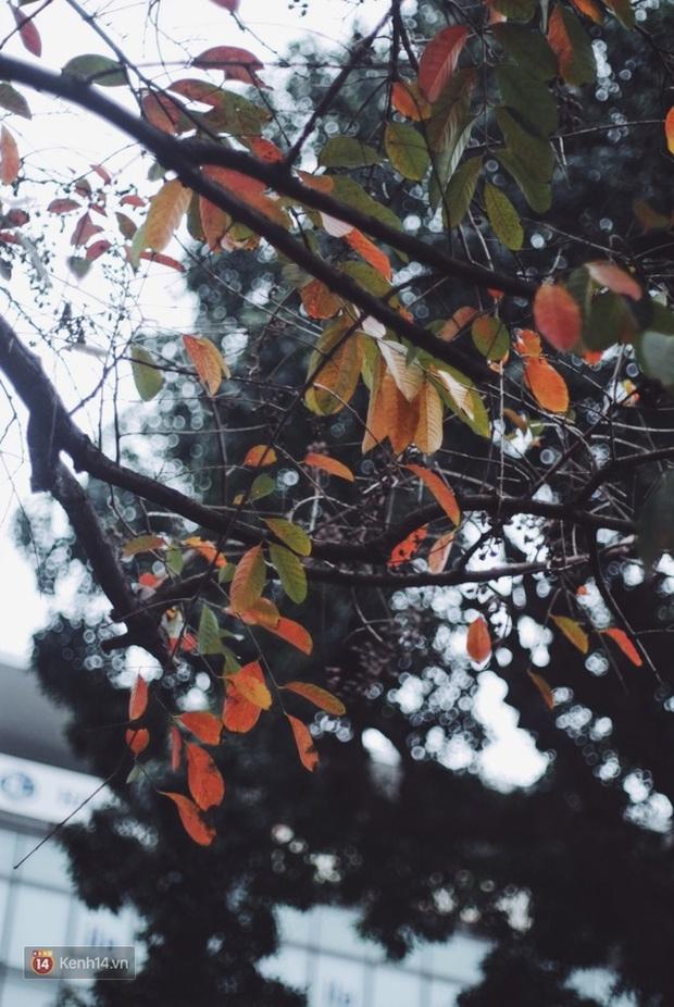 Ai nói Hà Nội không có mùa lá vàng, lá đỏ? - Ảnh 15.