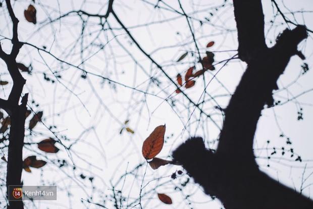 Ai nói Hà Nội không có mùa lá vàng, lá đỏ? - Ảnh 14.