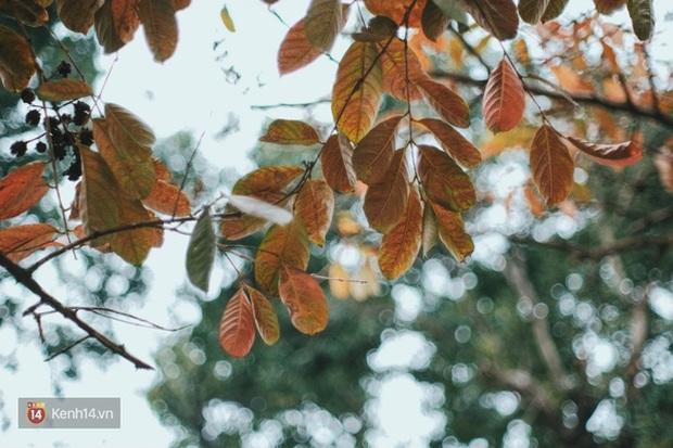 Ai nói Hà Nội không có mùa lá vàng, lá đỏ? - Ảnh 16.