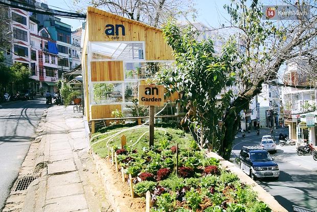 Những điều thú vị ở An - Quán cafe nằm giữa 5 cây mai anh đào cổ thụ tại Đà Lạt - Ảnh 3.