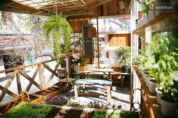 Những điều thú vị ở An - Quán cafe nằm giữa 5 cây mai anh đào cổ thụ tại Đà Lạt - Ảnh 15.