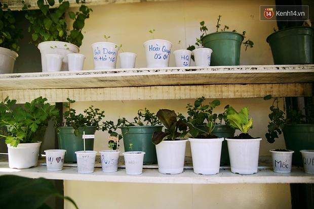 Những điều thú vị ở An - Quán cafe nằm giữa 5 cây mai anh đào cổ thụ tại Đà Lạt - Ảnh 11.