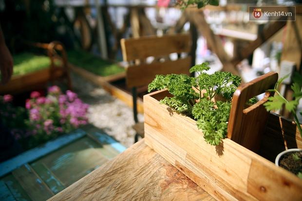 Những điều thú vị ở An - Quán cafe nằm giữa 5 cây mai anh đào cổ thụ tại Đà Lạt - Ảnh 6.