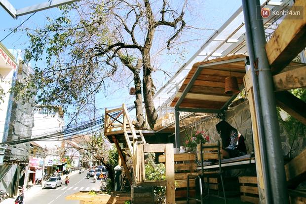 Những điều thú vị ở An - Quán cafe nằm giữa 5 cây mai anh đào cổ thụ tại Đà Lạt - Ảnh 18.