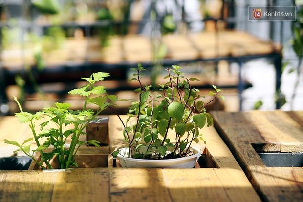 Những điều thú vị ở An - Quán cafe nằm giữa 5 cây mai anh đào cổ thụ tại Đà Lạt - Ảnh 5.