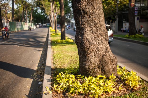 TPHCM: Ngắm nhìn hàng cây xanh trên đường Tôn Đức Thắng trước khi 300 cây sẽ bị chặt hạ - Ảnh 6.