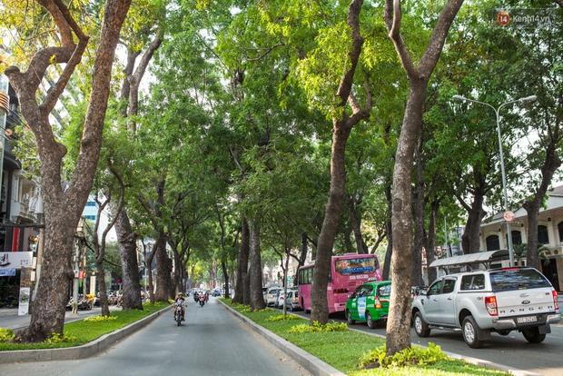 TPHCM: Ngắm nhìn hàng cây xanh trên đường Tôn Đức Thắng trước khi 300 cây sẽ bị chặt hạ - Ảnh 5.