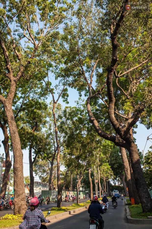 TPHCM: Ngắm nhìn hàng cây xanh trên đường Tôn Đức Thắng trước khi 300 cây sẽ bị chặt hạ - Ảnh 4.