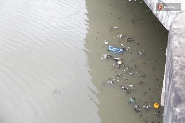 Hàng nghìn con cá ngoi lên mặt nước kênh Nhiêu Lộc - Thị Nghè để thở - Ảnh 9.