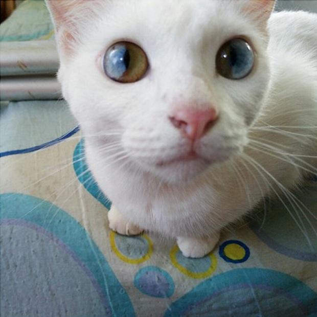 Những chú mèo mang cả dải ngân hà kỳ ảo trong đôi mắt - Ảnh 1.