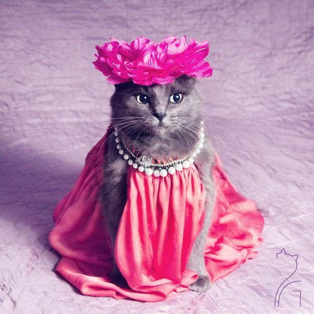 Nàng mèo xinh đẹp vượt khó trở thành fashionista sành điệu - Ảnh 1.