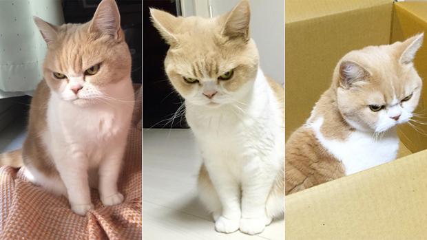 Cô mèo cáu kỉnh với gương mặt như đang dỗi cả thế giới - Ảnh 1.
