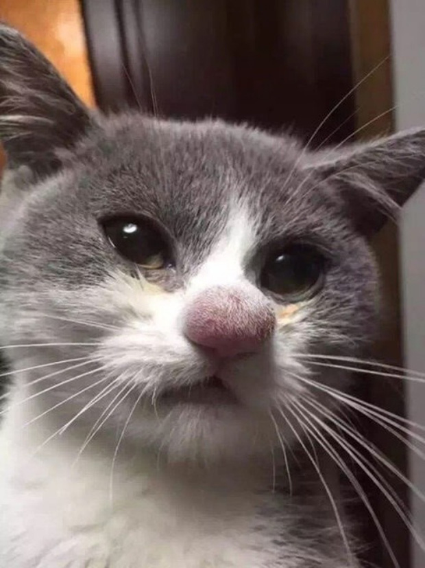 Khi lũ giặc mèo bị bắt quả tang đang quậy tanh bành nhà cửa - Ảnh 5.