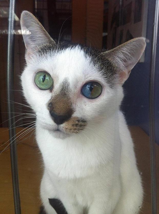 Những chú mèo mang cả dải ngân hà kỳ ảo trong đôi mắt - Ảnh 10.