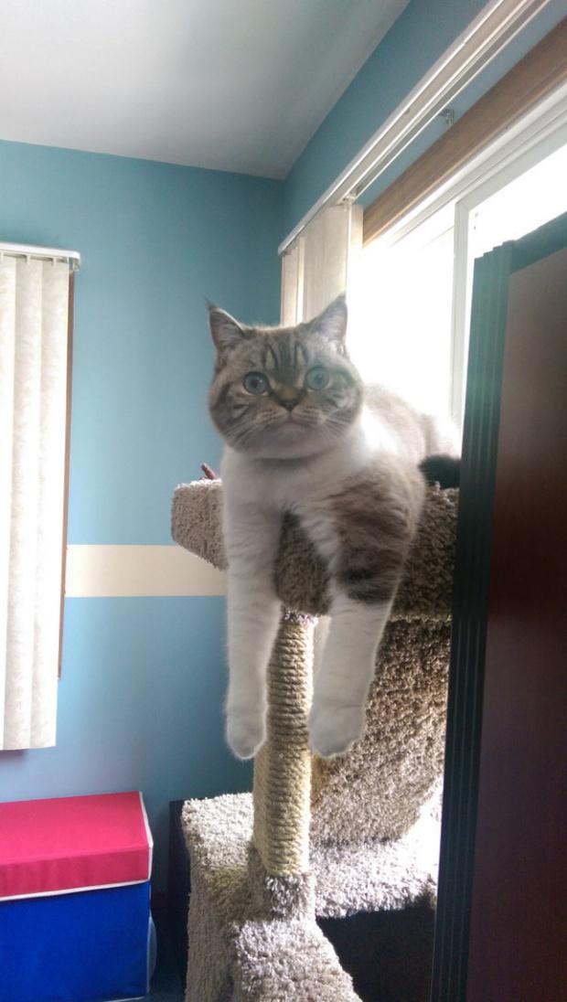 Khi lũ giặc mèo bị bắt quả tang đang quậy tanh bành nhà cửa - Ảnh 8.