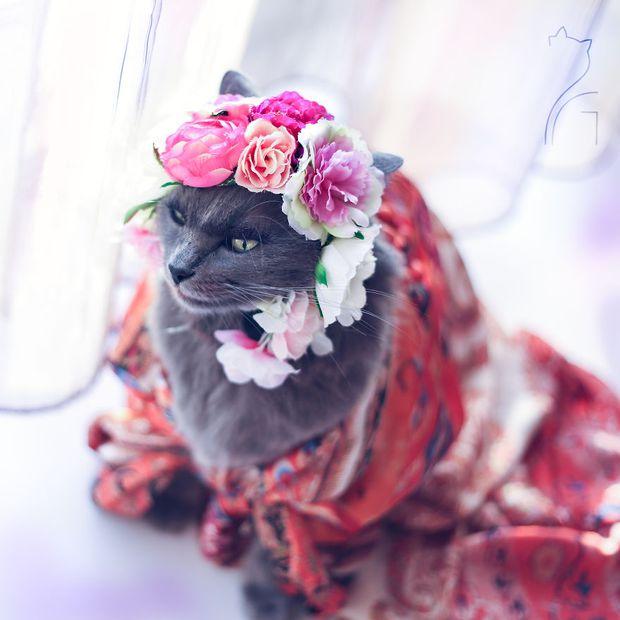 Nàng mèo xinh đẹp vượt khó trở thành fashionista sành điệu - Ảnh 8.