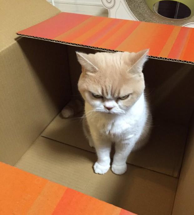 Cô mèo cáu kỉnh với gương mặt như đang dỗi cả thế giới - Ảnh 11.