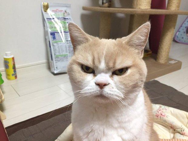 Cô mèo cáu kỉnh với gương mặt như đang dỗi cả thế giới - Ảnh 14.