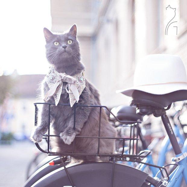 Nàng mèo xinh đẹp vượt khó trở thành fashionista sành điệu - Ảnh 9.