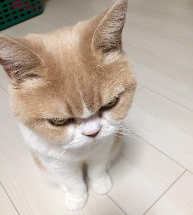 Cô mèo cáu kỉnh với gương mặt như đang dỗi cả thế giới - Ảnh 13.