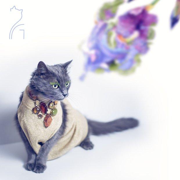 Nàng mèo xinh đẹp vượt khó trở thành fashionista sành điệu - Ảnh 10.