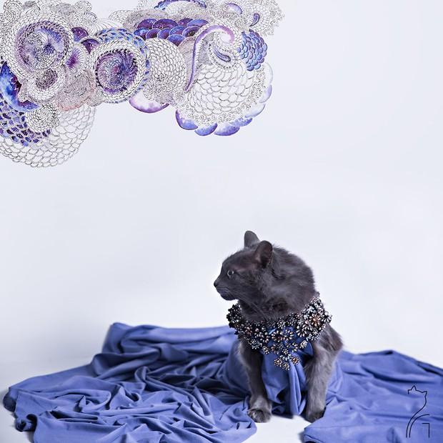 Nàng mèo xinh đẹp vượt khó trở thành fashionista sành điệu - Ảnh 11.