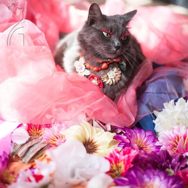 Nàng mèo xinh đẹp vượt khó trở thành fashionista sành điệu - Ảnh 12.