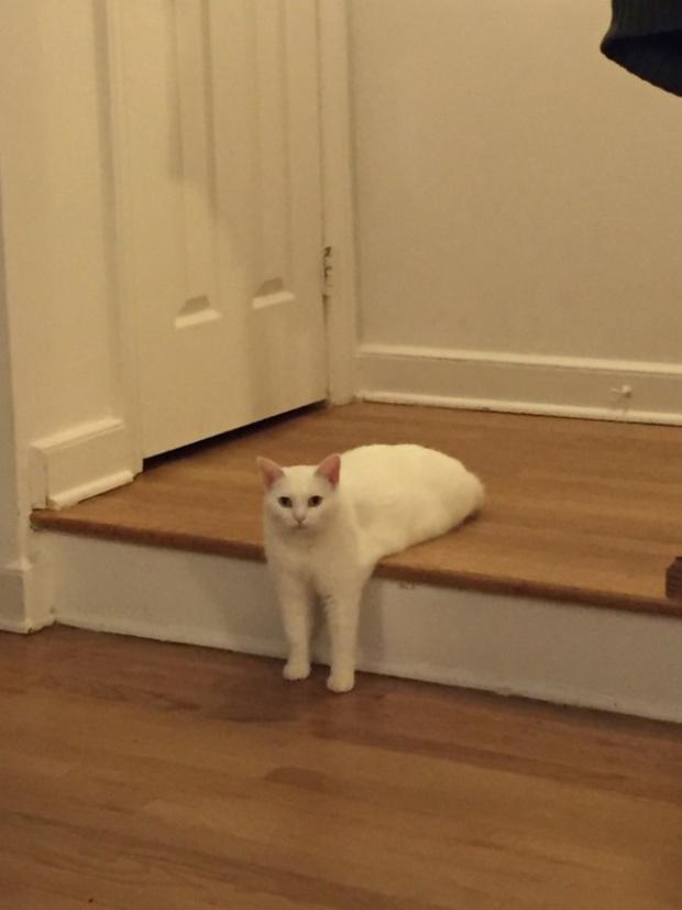 Khi lũ giặc mèo bị bắt quả tang đang quậy tanh bành nhà cửa - Ảnh 17.