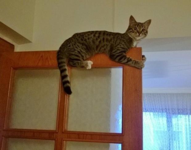 Khi lũ giặc mèo bị bắt quả tang đang quậy tanh bành nhà cửa - Ảnh 19.