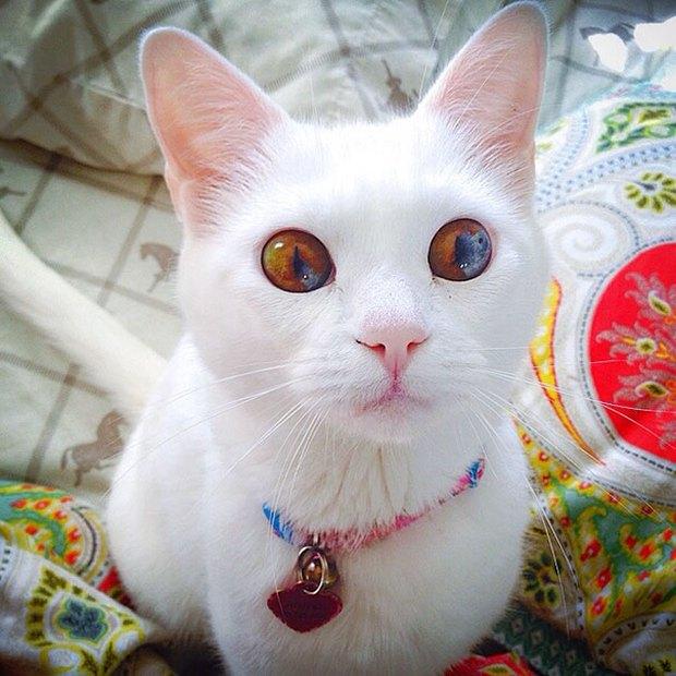 Những chú mèo mang cả dải ngân hà kỳ ảo trong đôi mắt - Ảnh 2.