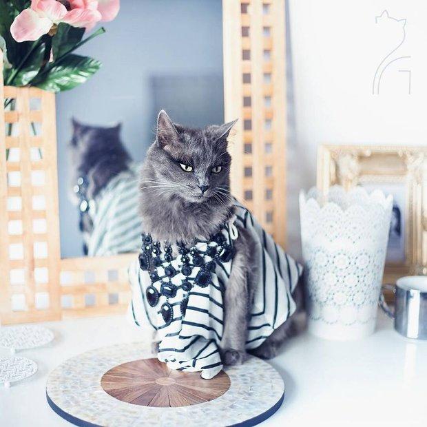 Nàng mèo xinh đẹp vượt khó trở thành fashionista sành điệu - Ảnh 2.