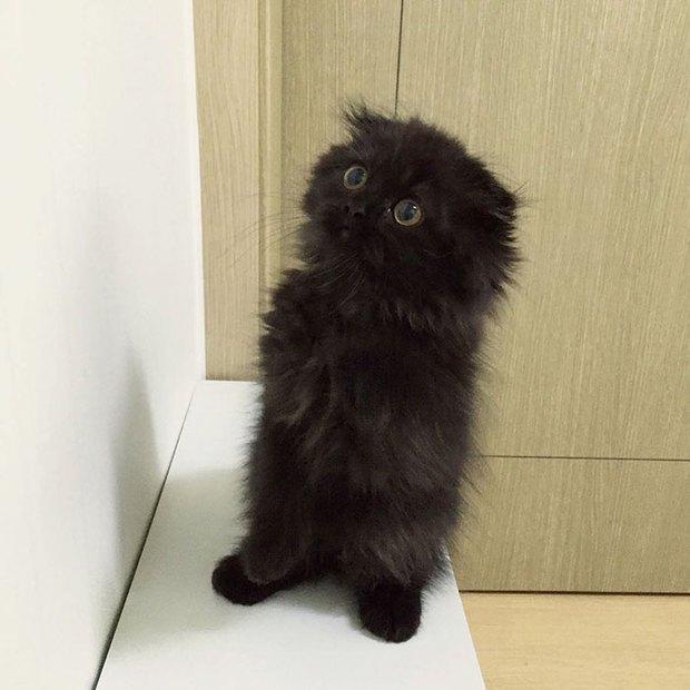Em mèo mắt to giống hệt nhân vật hoạt hình Ghibli - Ảnh 4.